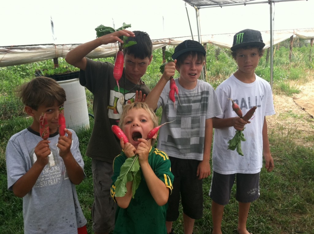 Boys and their radishes